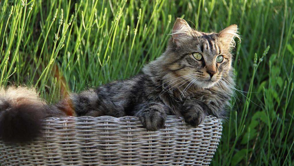 Un joli chat dans une corbeille