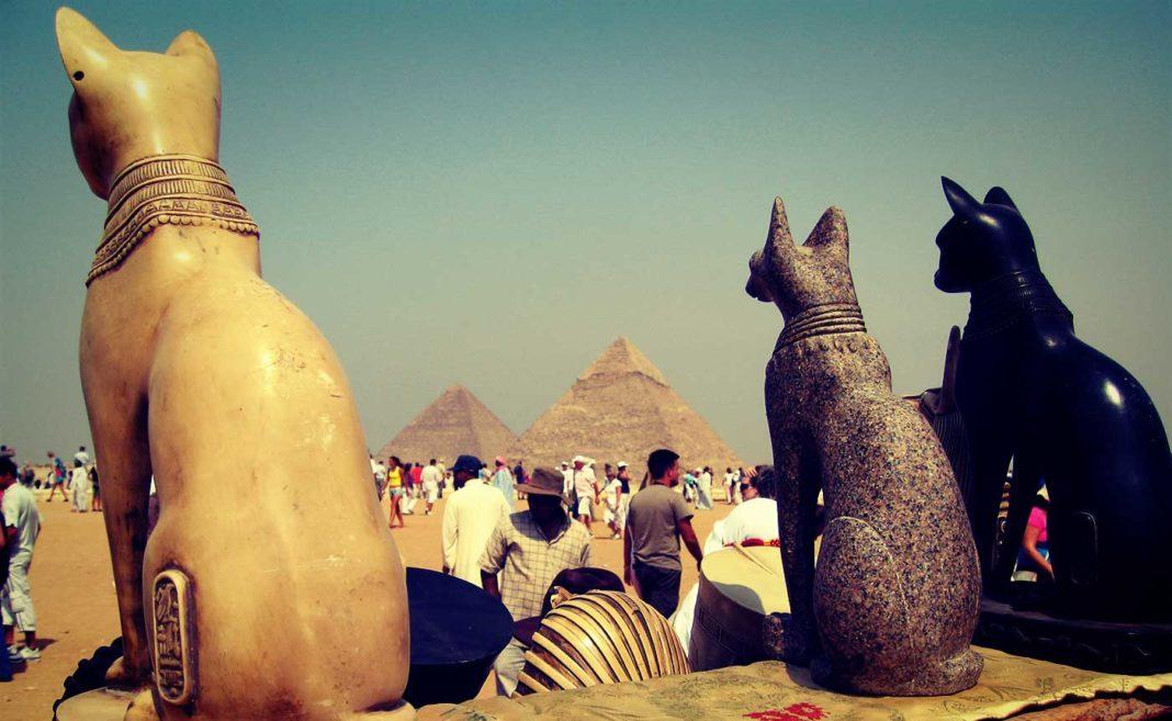 Des chats en Egypte au pied des pyramides.