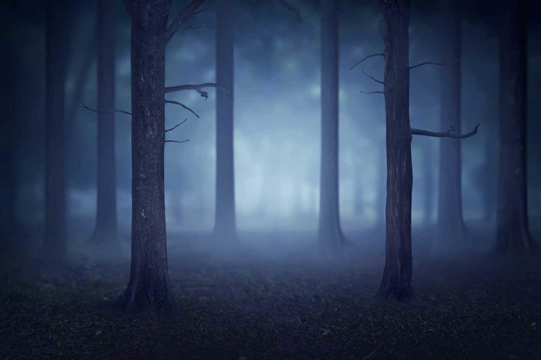 Une forêt la nuit, dans un léger brouillard suscite une peur irraisonnée attisée par toutes les histoires qu'on nous a racontées enfant.