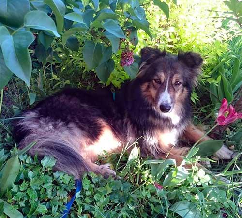 Oxo, dans son coin préféré au jardin.