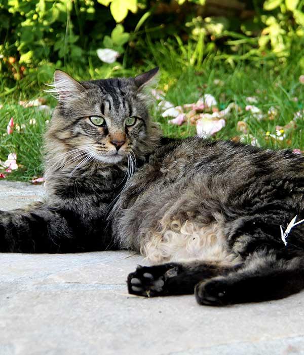 Aladin le malin est un chat qui explique aux humains comment faire ce qu'il faut avec les chats.